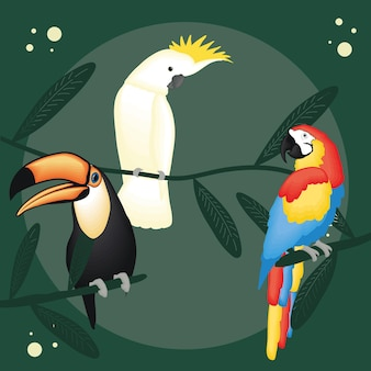Cute cockatoo toucan and macaw cartoons on green background