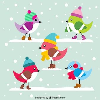 帽子とかわいいカラフルな鳥
