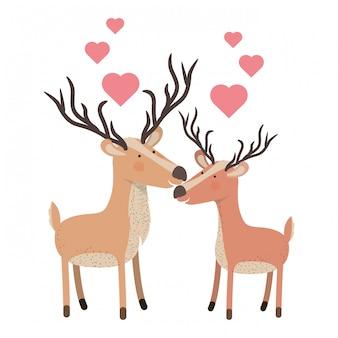 마음으로 귀여운 커플 deers
