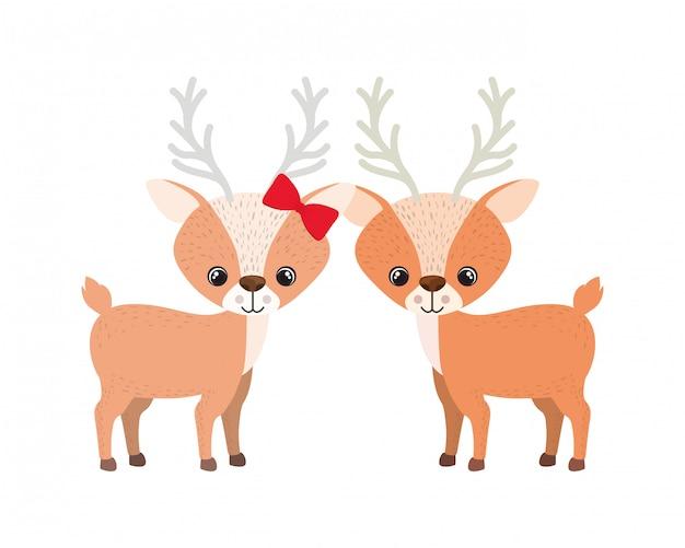Cute couple of deers