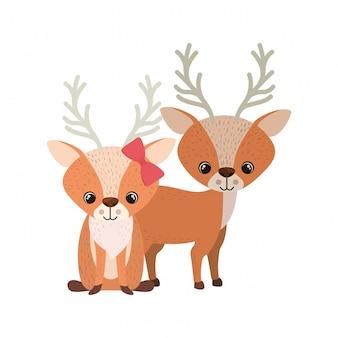 Милая пара оленей