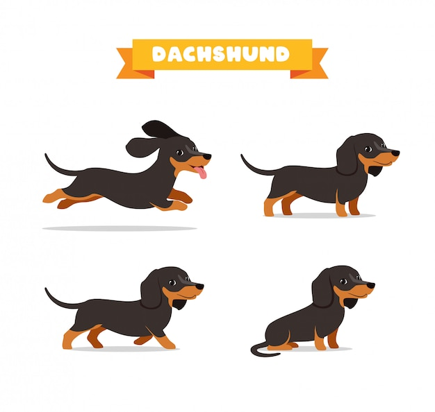 Cute dachshund dog animal pet with many pose bundle set
