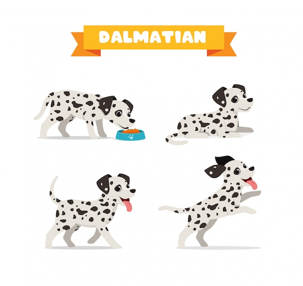 多くのポーズバンドルセットを持つかわいいダルメシアン犬動物ペット