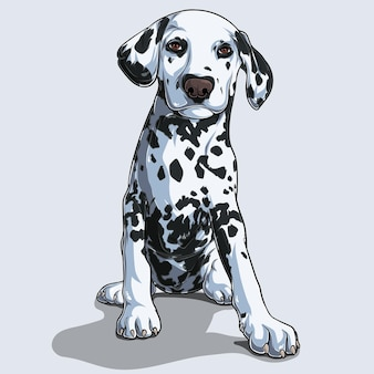 Cute dalmatian dog sitting isolated