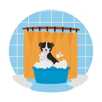 Cute dog bathing in blue tub