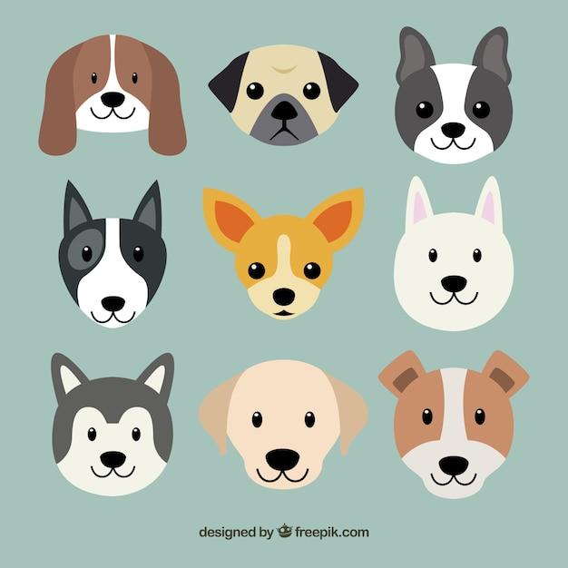 Must see Grey Chubby Adorable Dog - cute-dog-breeds_23-2147519661  Gallery_198559  .jpg?size\u003d338\u0026ext\u003djpg