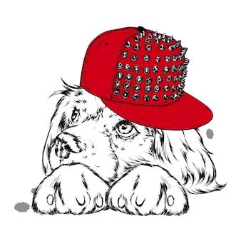 Милая собака в кепке.