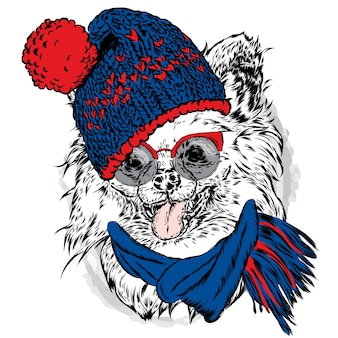 帽子とメガネのかわいい犬