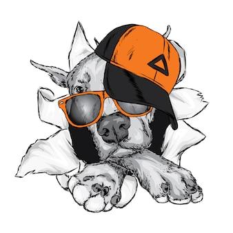キャップとメガネのかわいい犬。ベクトルイラスト。