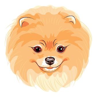 귀여운 강아지 포메 라니아