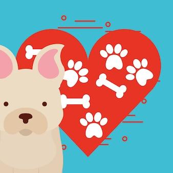 Милая собака сидит с лапой и костью сердце любовь собака домашнее животное