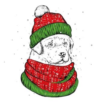 冬の帽子をかぶったかわいい犬。元日とクリスマス。
