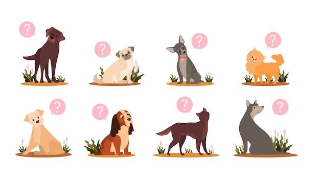 물음표 세트와 함께 귀여운 강아지입니다. 혼란 감정을 가진 다양한 품종의 퓨어 브레드 개 컬렉션. 얼굴 표정을 요구하는 재미있는 국내 애완 동물.