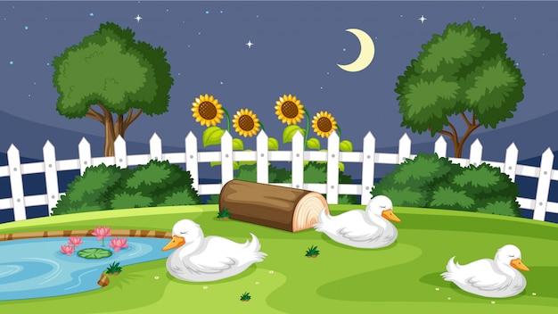 Cute duck sleeping on grass