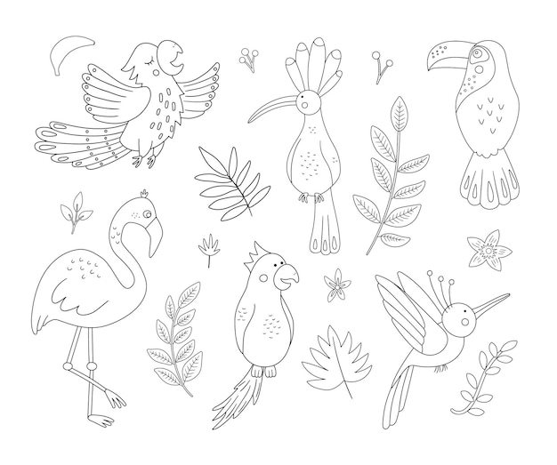 Cute exotic birds, leaves, flowers outlines. funny tropical animals and plants black and white illustration. jungle summer sketch