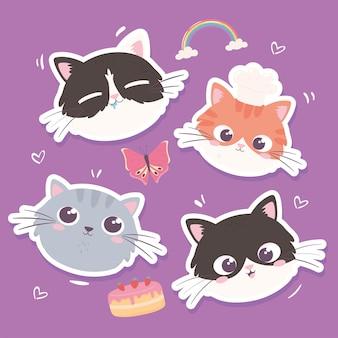 Cute faces kitty