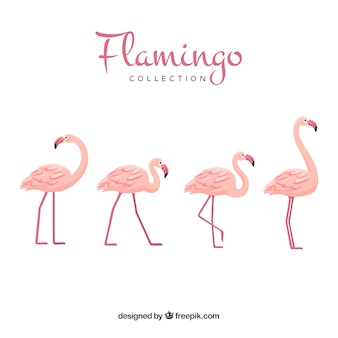 Cute flamingos collection in hand drawn style