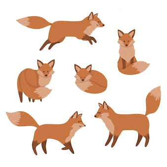 Cute foxes are sleeping, sitting and jumping. set