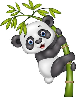 Cute funny baby panda hanging on the bamboo tree