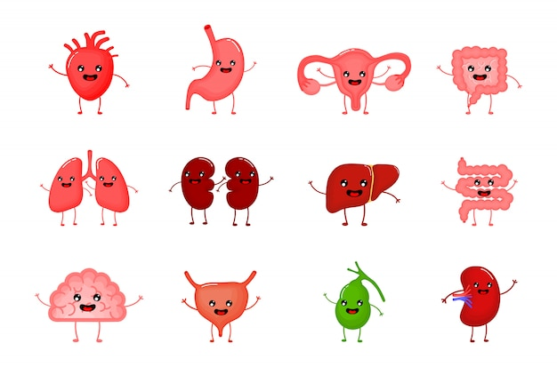 Cute and funny healthy human strong organs cartoon characters set.