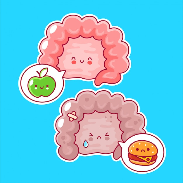 Cute funny human intestine organ and speech bubble with foods.