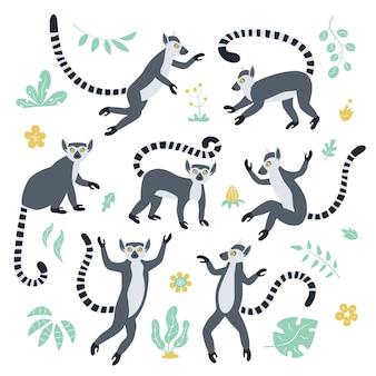 Симпатичные забавные хвостатые лемуры и тропические растения. экзотический лемур катта