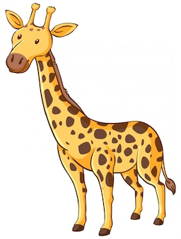 Cute giraffe standing on white background