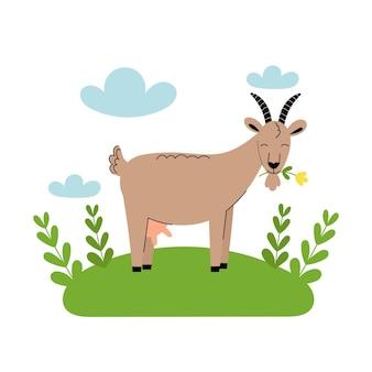 초원에 꽃이 서 있는 귀여운 염소. 만화 농장 동물, 농업, 소박한. 푸른 구름과 푸른 잔디가 있는 흰색 배경에 간단한 벡터 평면 그림입니다.