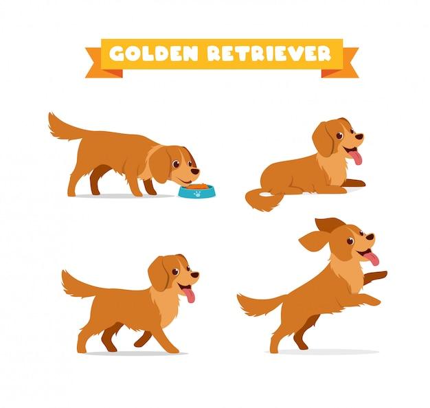 Cute golden retriever dog animal pet with many pose bundle set