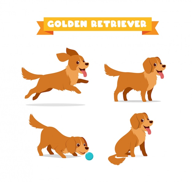 Cute golden retriever dog animal pet with many pose bundle set