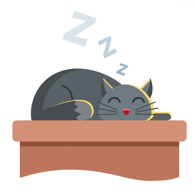 Cute gray cat lies on the table and peacefully slumbers. snore cute animal.