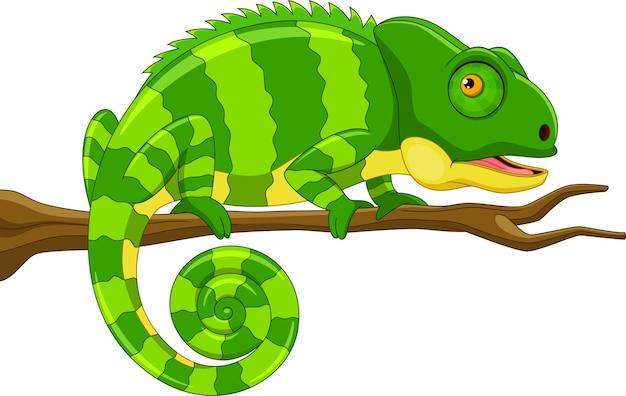 Cute green chameleon on branch cartoon