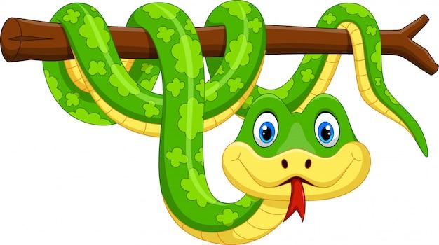 Cute green snake cartoon on branch