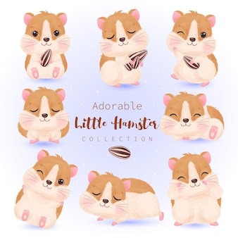 Cute hamster illustration collection in watercolor
