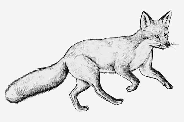 Vettore disegnato a mano sveglio della volpe