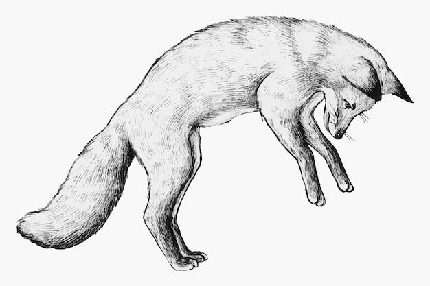 Cute hand drawn fox