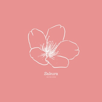Cute hand drawn sakura flower illustration .