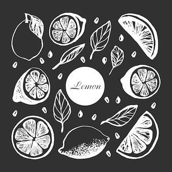 메뉴나 레시피를 위해 잎과 씨앗이 있는 레몬 조각으로 귀여운 손으로 그린 세트