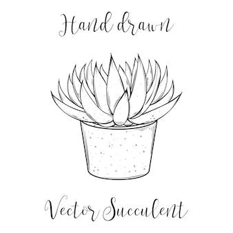 コンクリートの植木鉢にかわいい手描きのジューシーなアストロロバテナックス。黒と白のイラストをベクトルします。サボテンアロエ