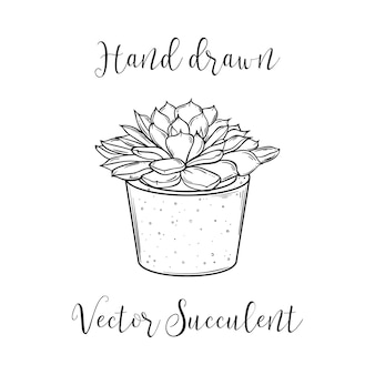 Cute hand drawn succulent in a concrete flower pot. vector black and white illustration. eps10