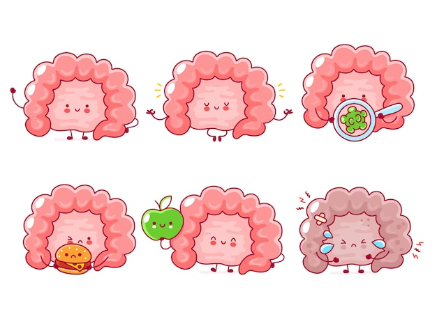 Cute happy funny human intestine organ set collection.   line cartoon kawaii character illustration icon.  on white background. digestive tract concept
