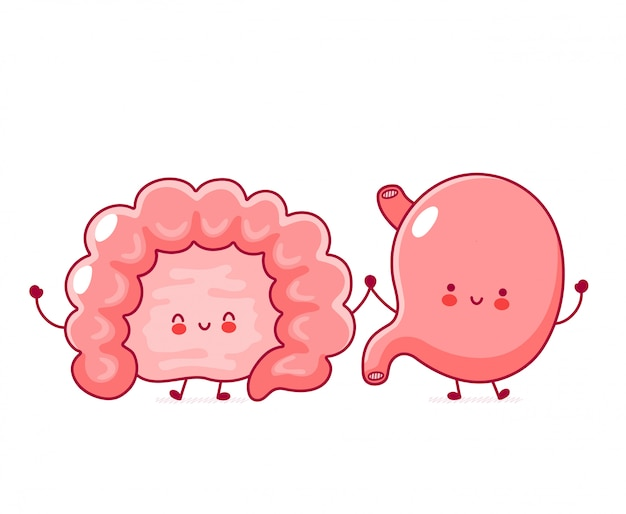Cute happy funny human intestine and stomach organ.