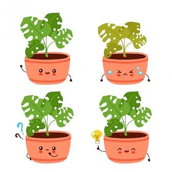 Милое счастливое смешное растение монстера в коллекции горшков.