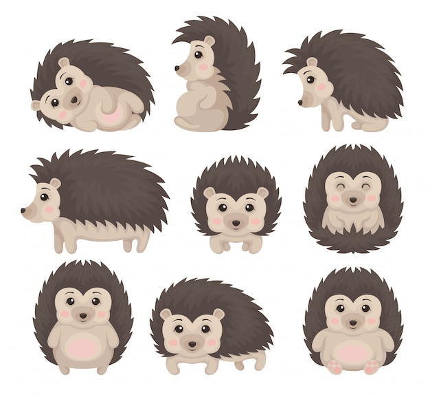 Cute hedgehog in various poses set, lovely prickly animal cartoon character  illustration on a white background