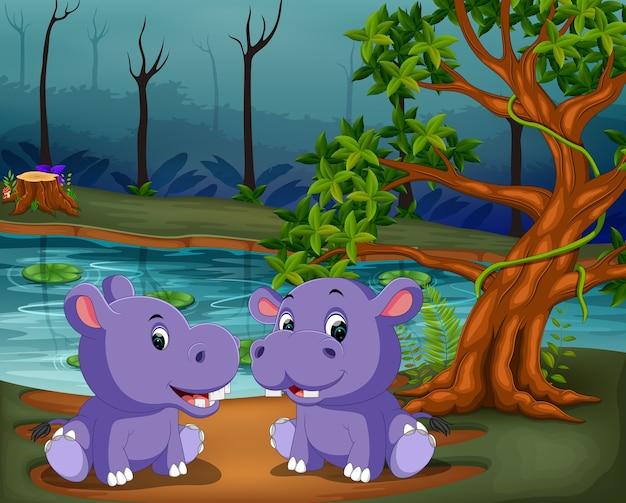 Cute hippo couple