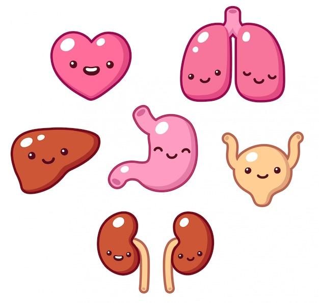 Cute human organs set