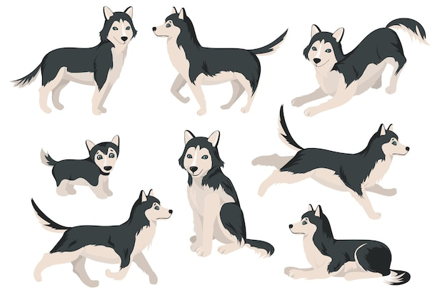 Cute husky dog in different poses flat set
