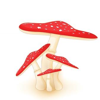 Симпатичные иллюстрации грибов на белом фоне