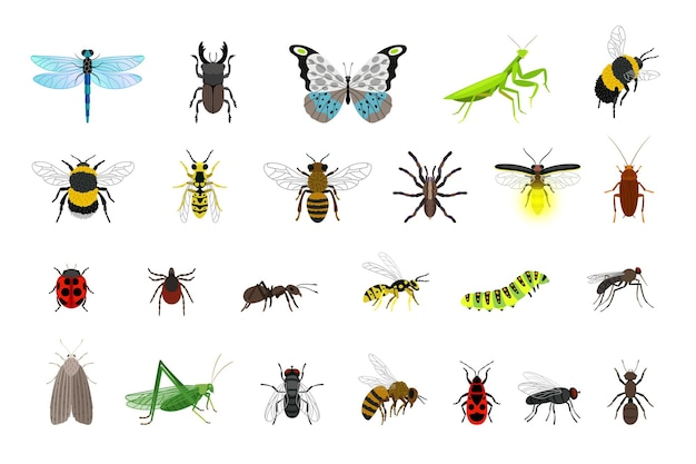 귀여운 곤충 컬렉션입니다. 만화 작은 다채로운 딱정벌레와 애벌레, 벌레와 나비, 흰색 배경에 고립 된 과학 곤충학 생물의 벡터 일러스트 레이 션