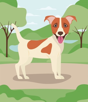 Cute jack russell terrier dog pet in the camp